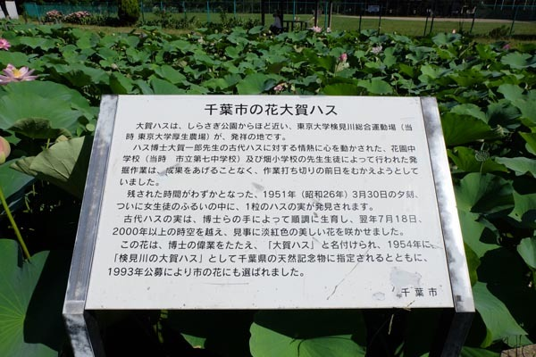 しらさぎ公園-02.jpg