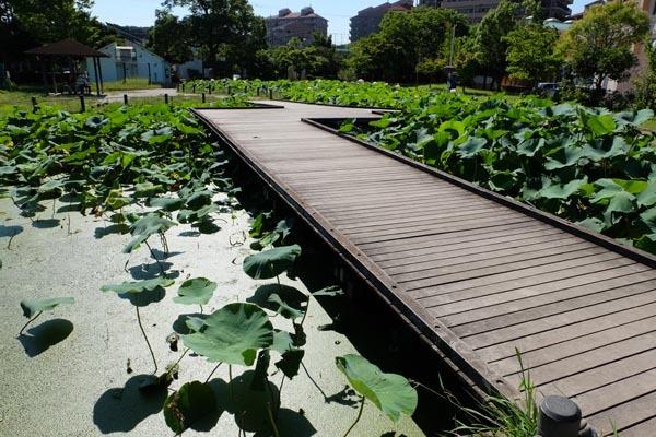 しらさぎ公園-03.jpg