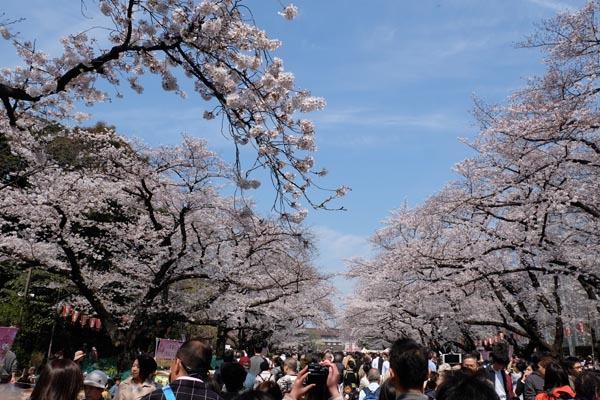 東京国立博物館庭園開放_恩賜公園-03.jpg