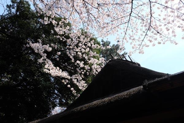 東京国立博物館庭園開放_春草廬-06.jpg