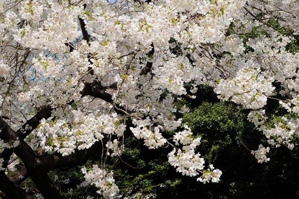 東京国立博物館庭園開放_東京国立博物館-05.jpg