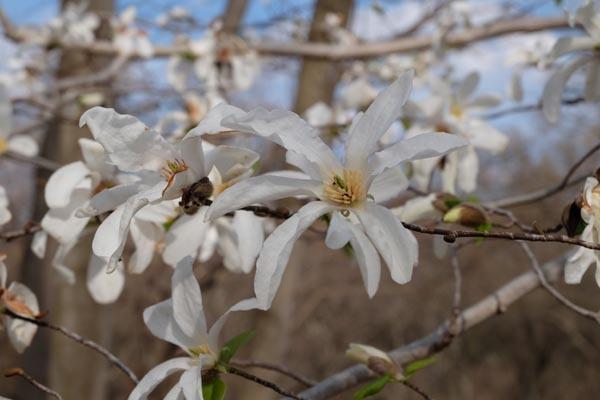 4月の加曽利貝塚-05.jpg