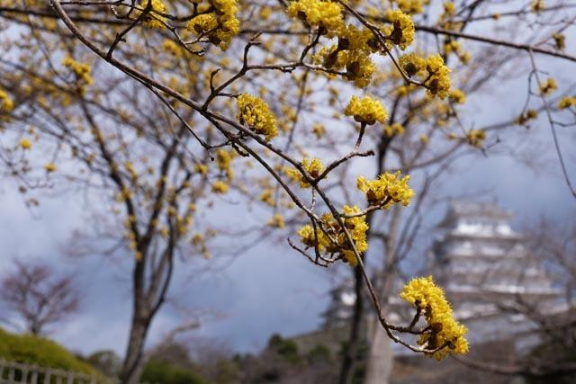 姫路城13.jpg