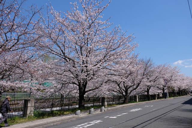 草野水路01.jpg